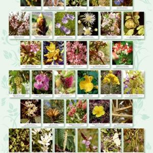 afiche flores de bach