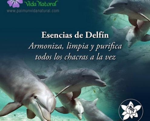 esencias delfin flores phi california