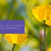 flores de california